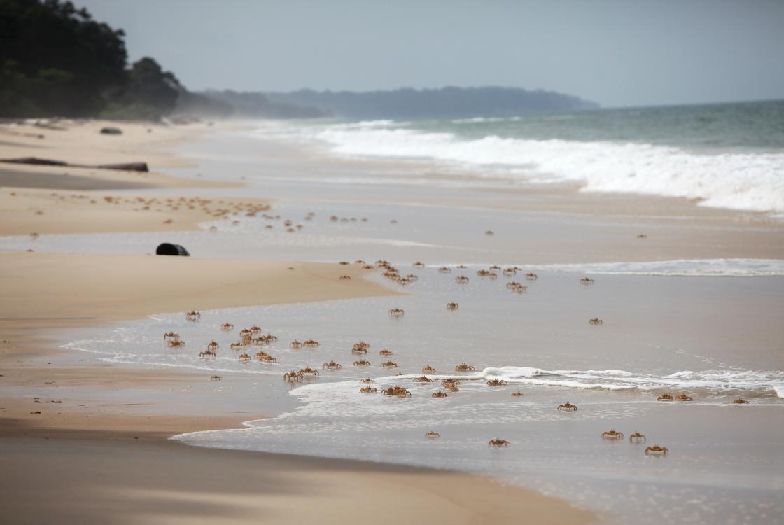 Au Gabon, entre la forêt tropicale, la savane et les plages