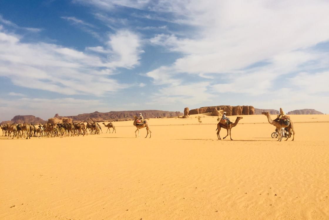 désert, chameaux, paysage, Tchad