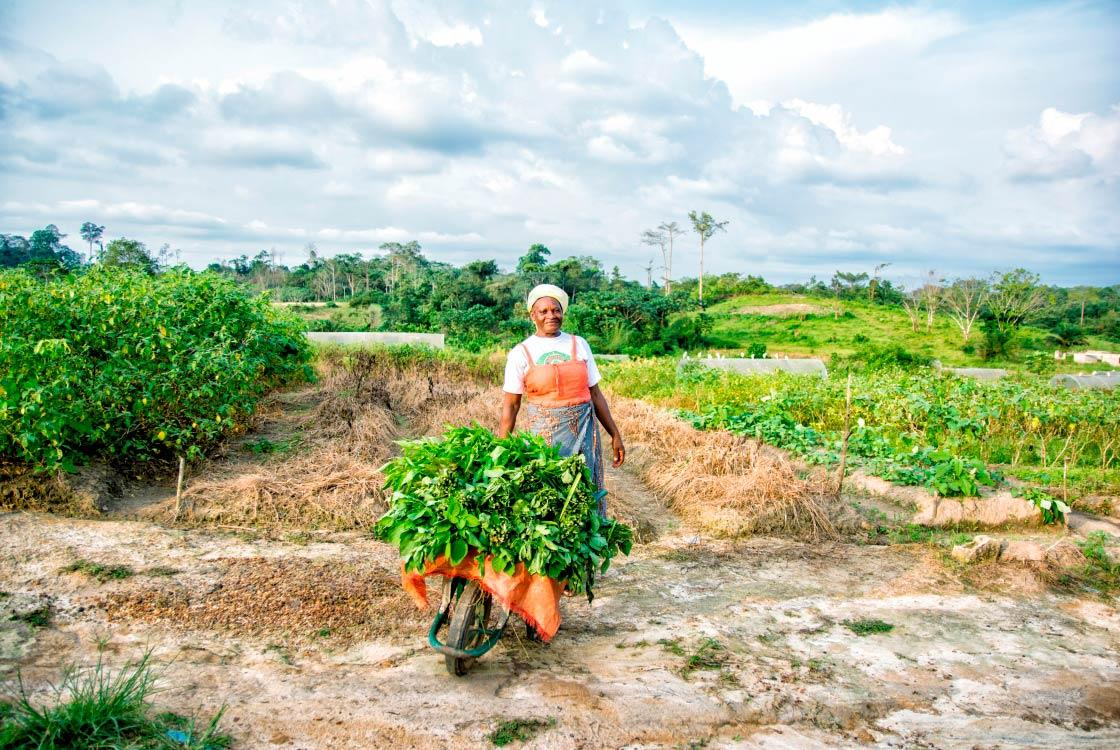 Agriculture and rural development, woman, Gabon