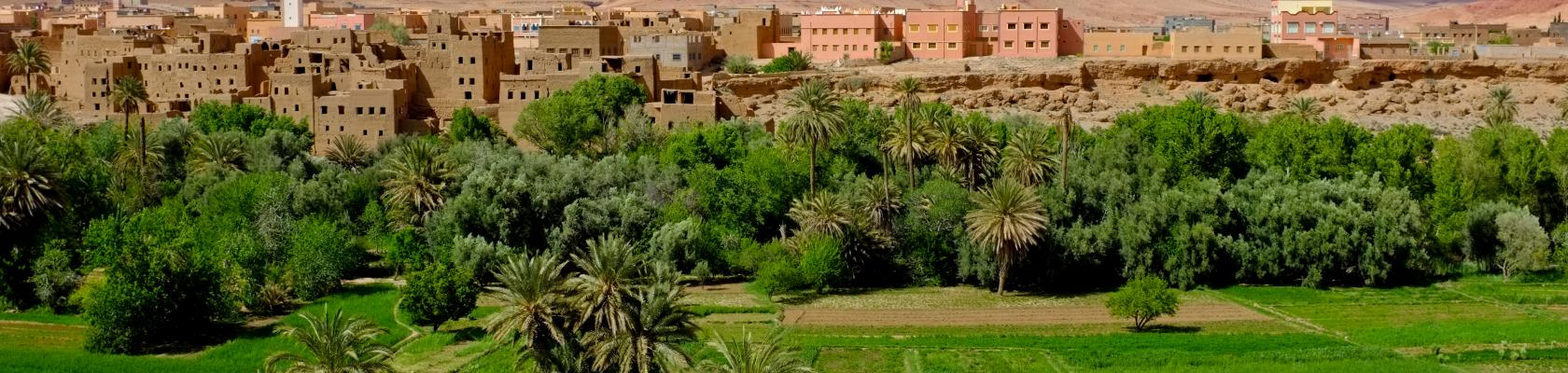 Maroc champ agriculture paysage