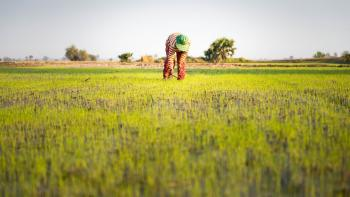 agriculture, woman, rice, Cambodia