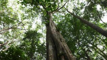 forêt, arbres, Gabon