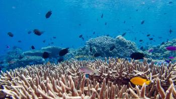 vie aquatique, biodiversité marine, océan