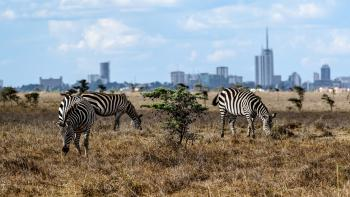 Nairobi Kenya zebra park wildlife countryside city savanna urban jungle