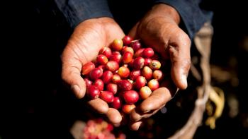 Laos: the coffee of the Bolovens in the big leagues