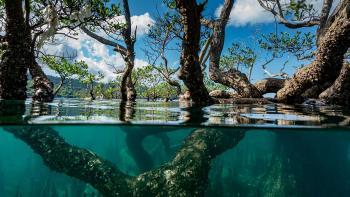 Initiatives Mangroves, biodiversité