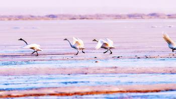 zone humide Chine, oiseaux, biodiversité