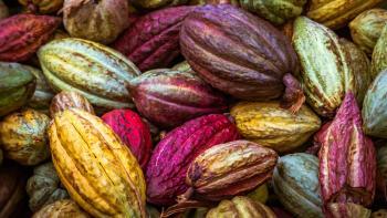 Les défis du secteur du cacao au Ghana