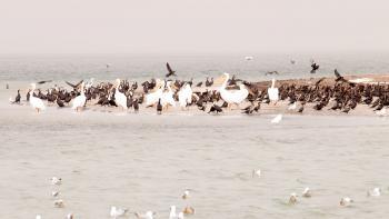 parc national du banc d'Arguin, Mauritanie, protection de la biodiversité