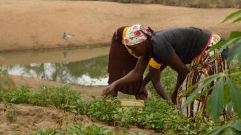 agriculture, parc national du Limpopo, Mozambique