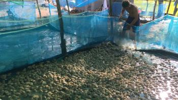 Cambodia Aquaculture food security AFD