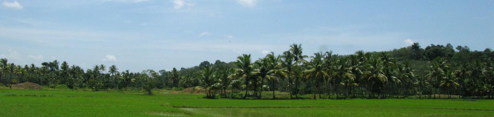 Inde Western Ghats paysage biodiversité