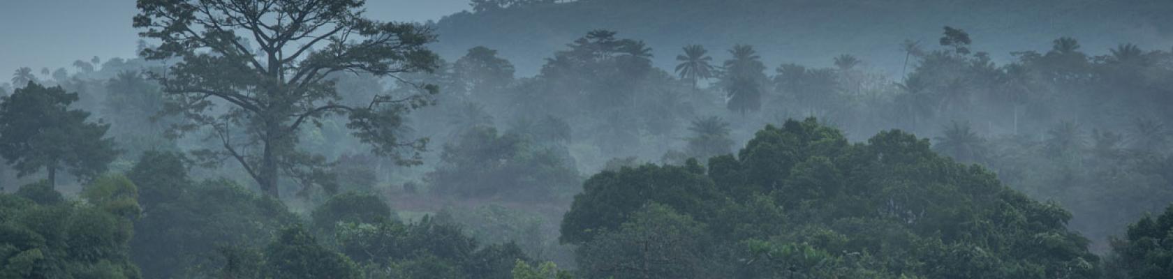 Guinée forestière, forêt