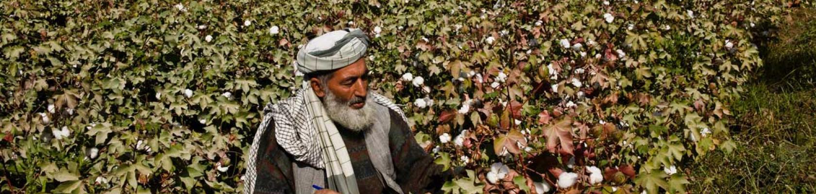 La ferme Puze e Sham, Afghanistan