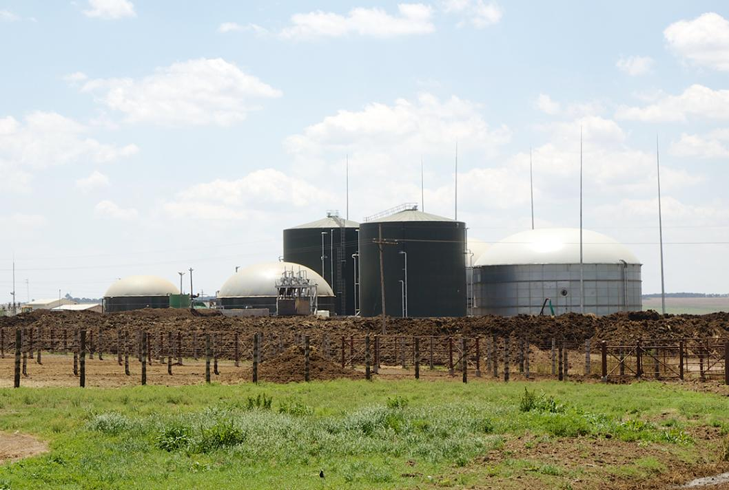 South Africa, Bio2Watt, factory and cows