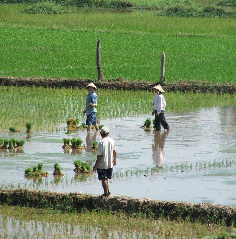 Rizière, Laos