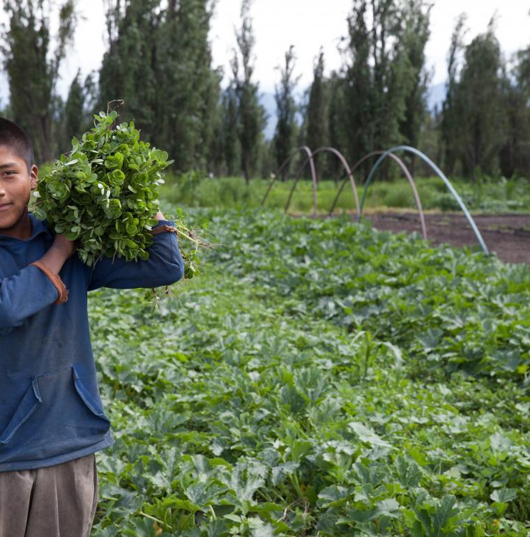 Jeune agriculteur dans la zone patrimoniale lacustre de Xochimilco, Mexique