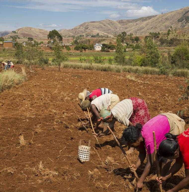 Madagascar femmes agriculture riz