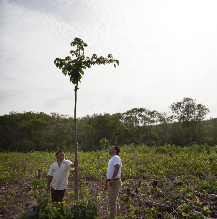 Mexique Agriculteur à l'ejido San Agustín au Yucatán. Reforestation programme REDD+