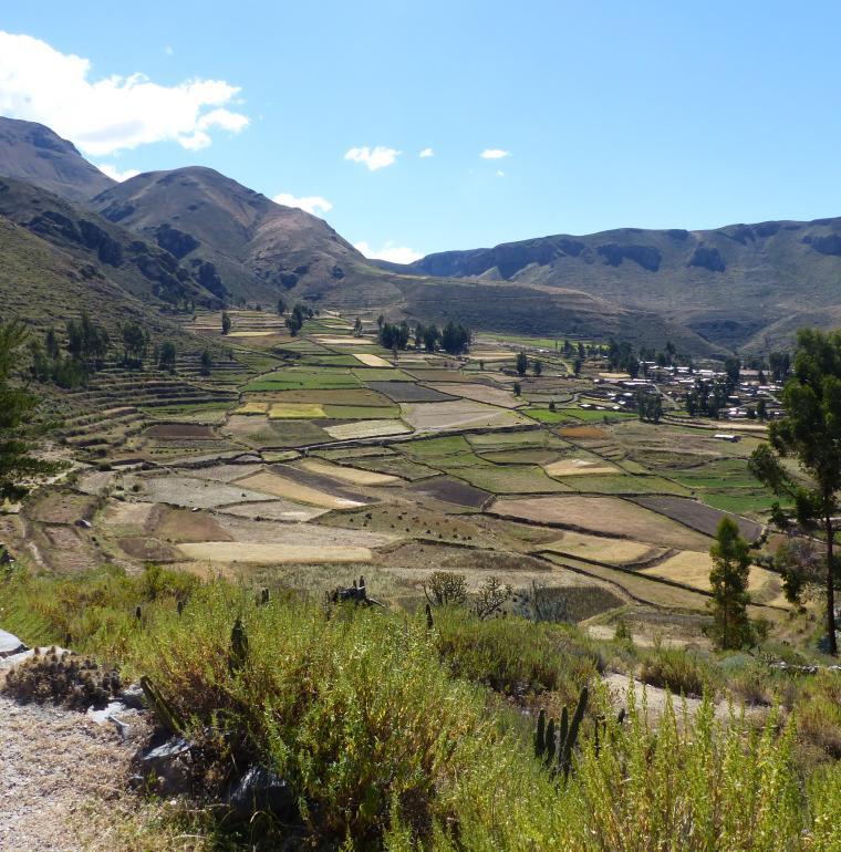 Pérou, champs agricoles