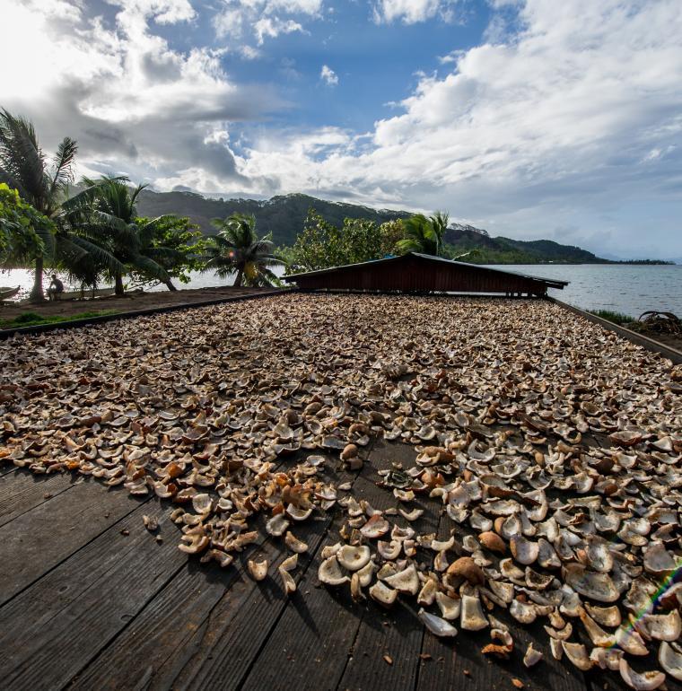 Polynésie Française Noix de coco séchée
