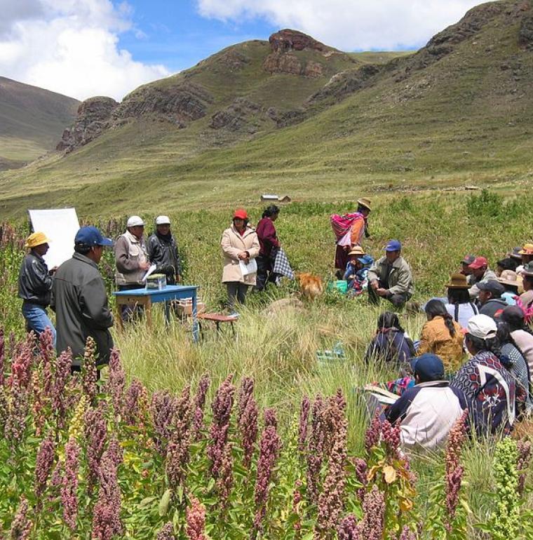 En Bolivie, des paysans se réunissent dans un champ de quinoa