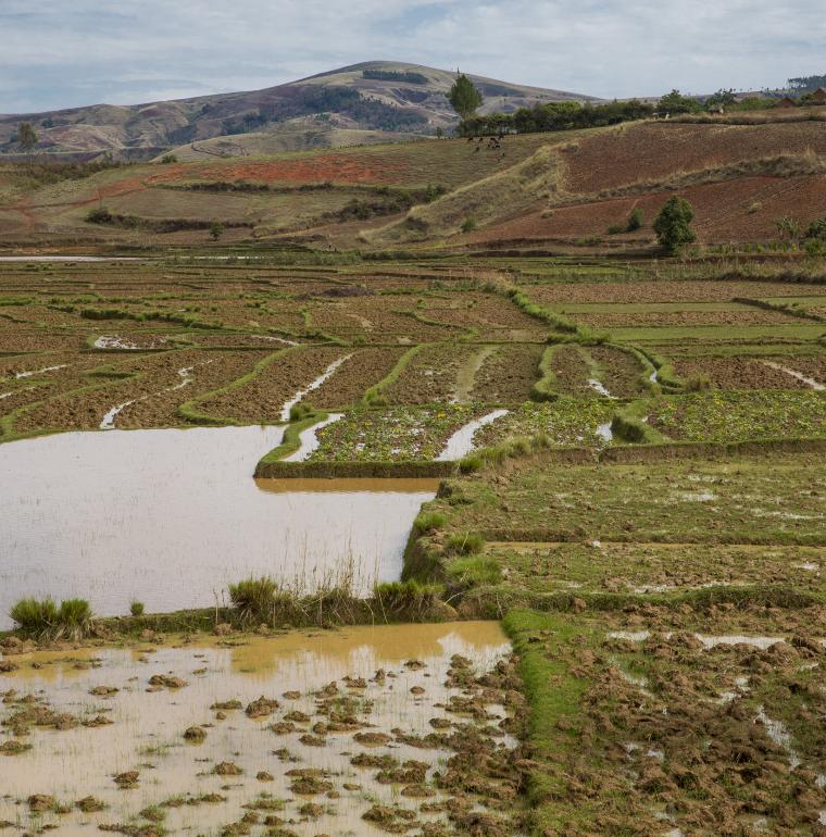Rice crops, cultivated lands, Madagascar