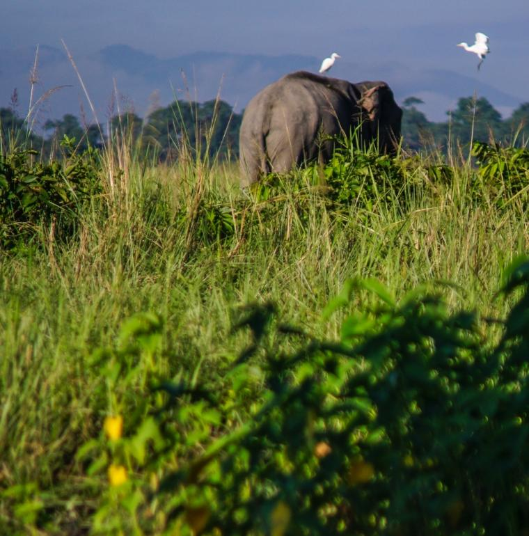 éléphant, nature, biodiversité, Inde