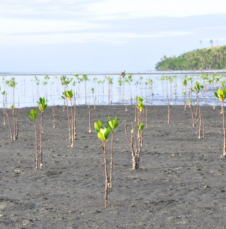 Environments, plants, growing crop, nature, New-Caledonia