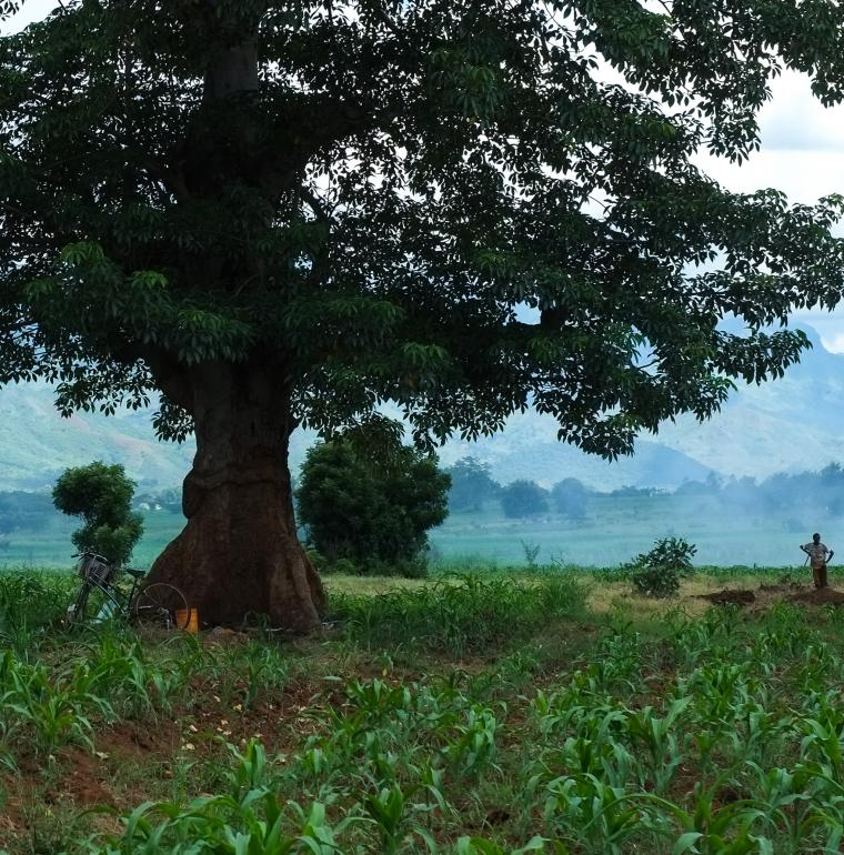 Un fermier dans son champ, Tanzanie
