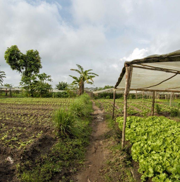 agriculture, plantation, Gabon