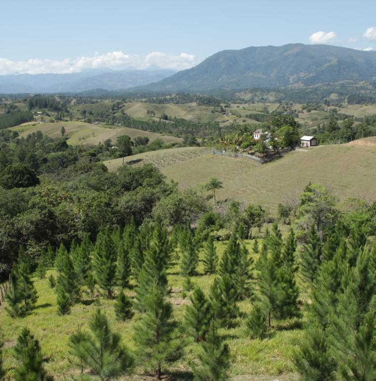 Dominican Republic, reforestation, Galbrun