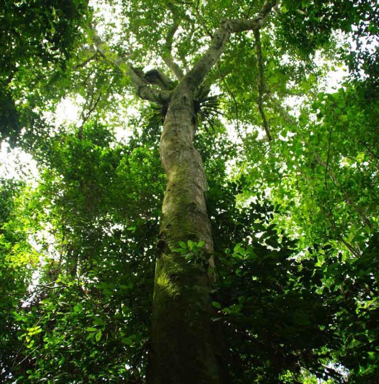 RDC Forêt Bandundu
