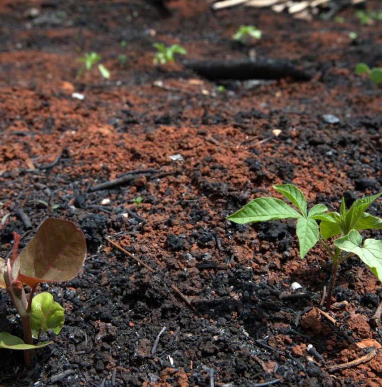 Au Mexique, des plantes qui repoussent après déforestation et dégradation des forêts