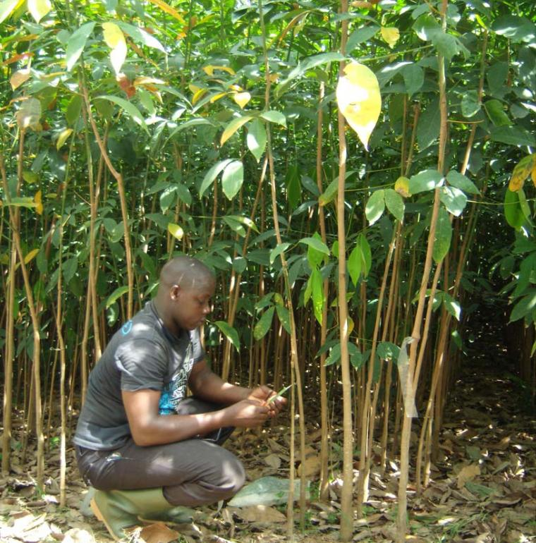 Côte d'Ivoire agriculture homme
