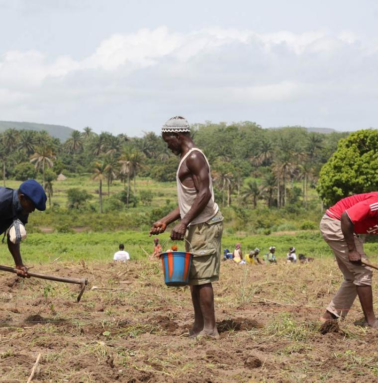 Travaux des champs en Guinée