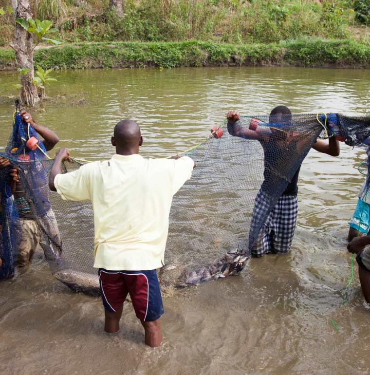 Guinée Pisciculture pêche poissons