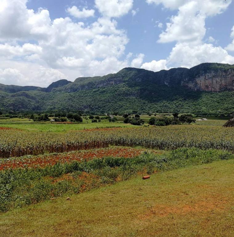 Parcelles agricoles de la région de Viñales, Cuba, agriculture
