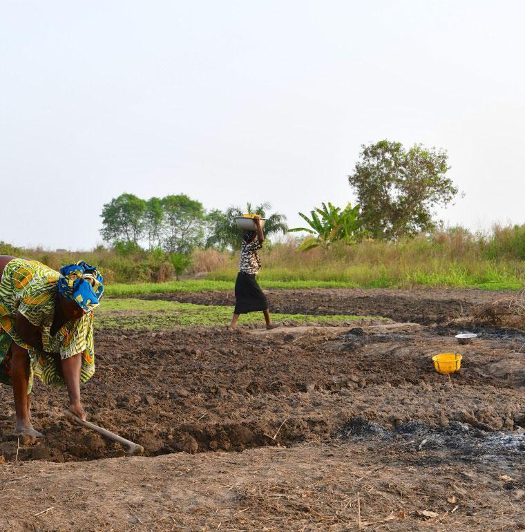 agriculture, développement, Bénin