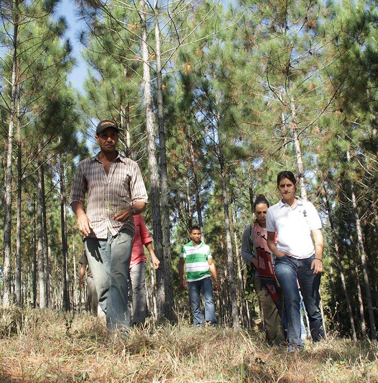 Reforestation, République dominicaine, Plan Sierra, Trois Océans