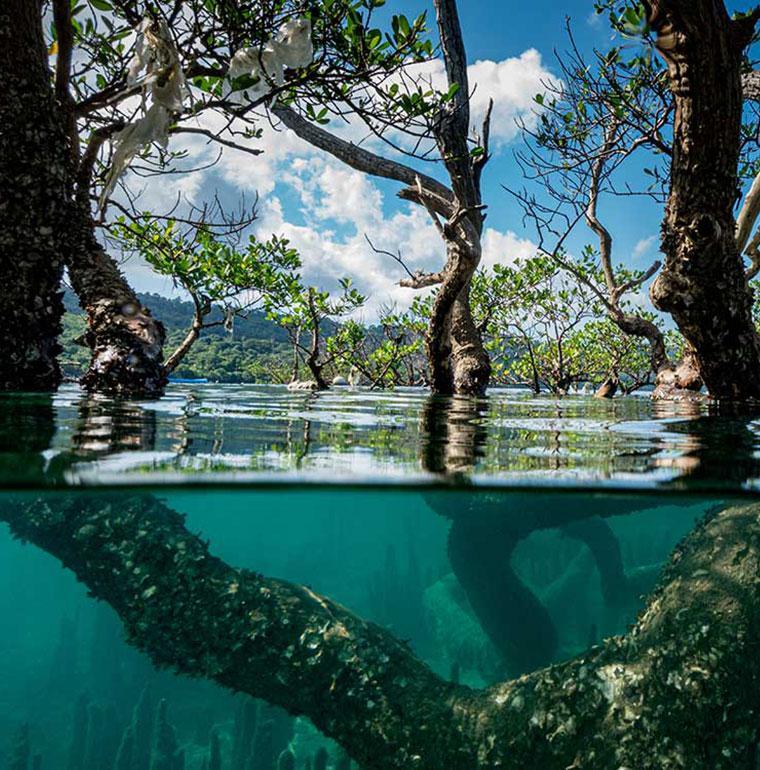 mangroves, FFEM