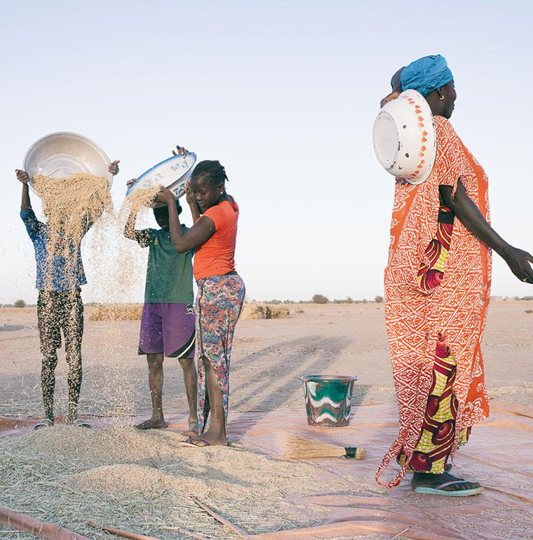 Sénégal, agriculture, récolte, Andrianjafy