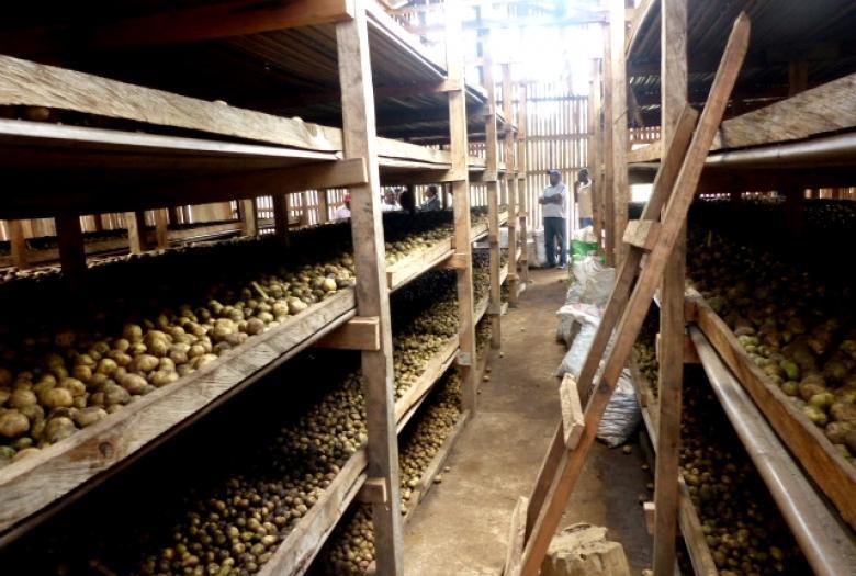 développement PME secteur agricole, projet Cameroun