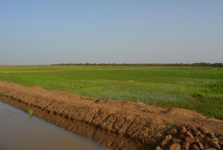 Irrigation, agriculture, Sénégal