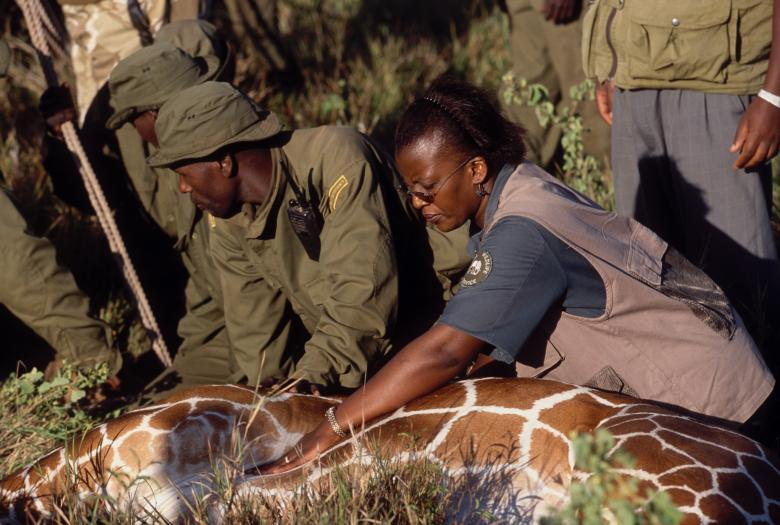 Rehabilitation of Meru National Park - Picture
