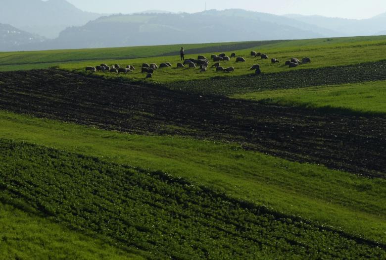 Accompagner la mise en oeuvre du Plan Maroc Vert dans les régions du Nord