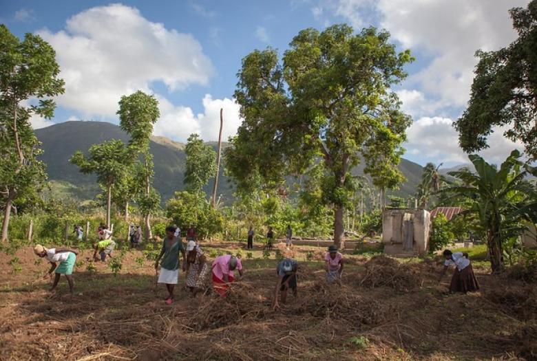 Transitions agroécologiques et résilience des territoires ruraux