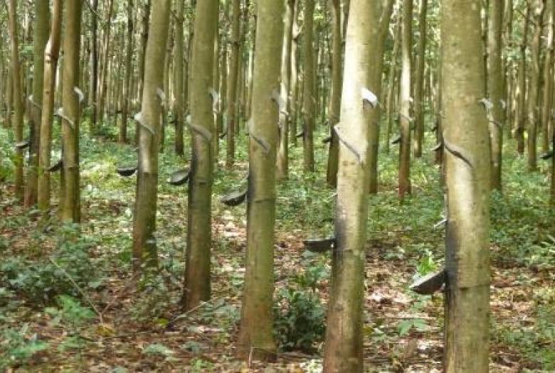 Soutenir la fili re du bois d h v a au cambodge afd for Cendre de bois au jardin