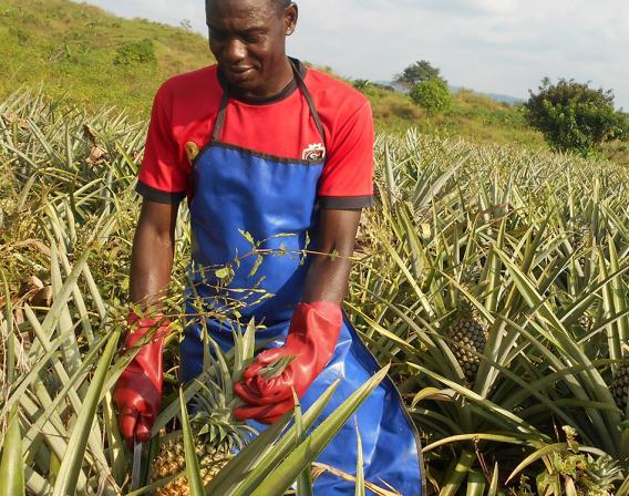 Cameroun, agriculture, Transform