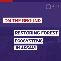 Restoring forest ecosystem in Assam